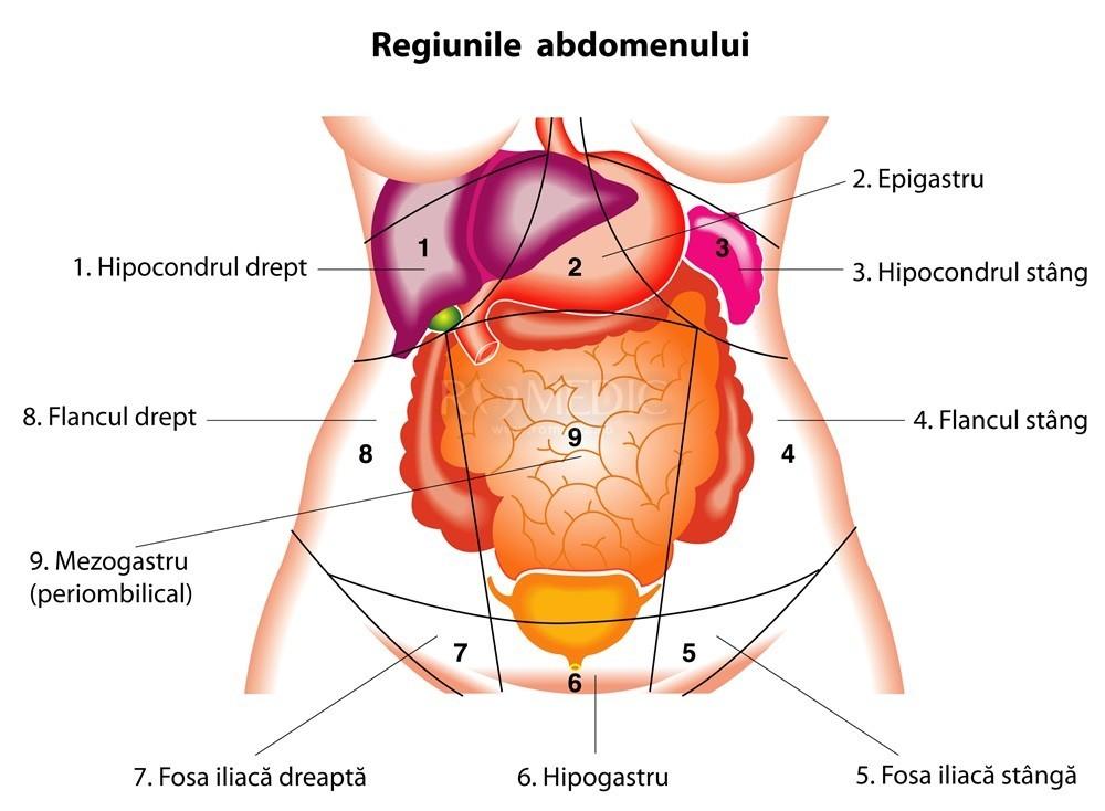 dureri la nivelul articulațiilor umărului și hipocondrului