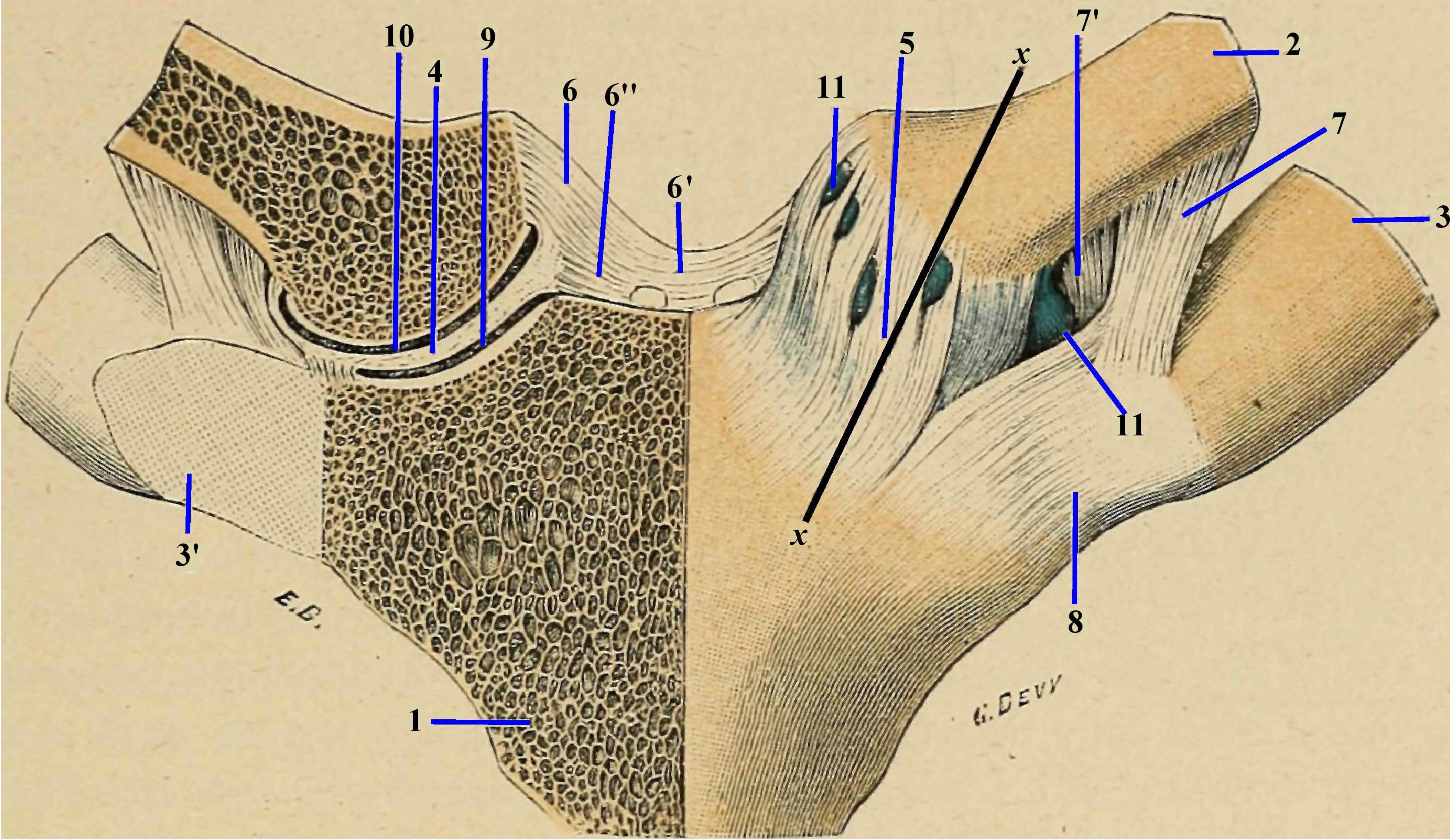 leziunea articulațiilor sternoclaviculare
