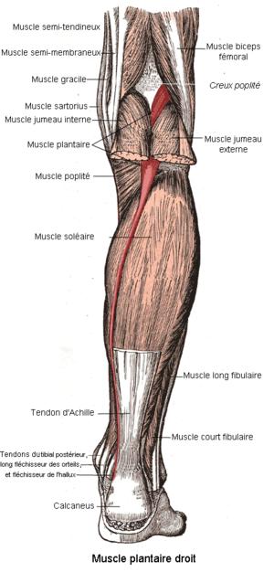 calmant pentru injecții pentru dureri articulare