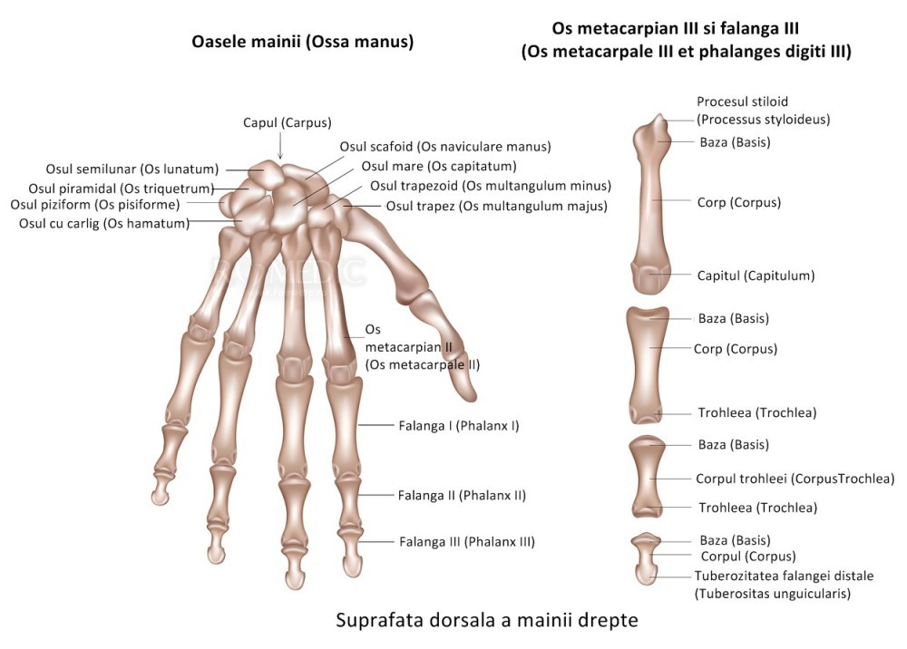 Dureri degete - Articulațiile degetelor inelare doare