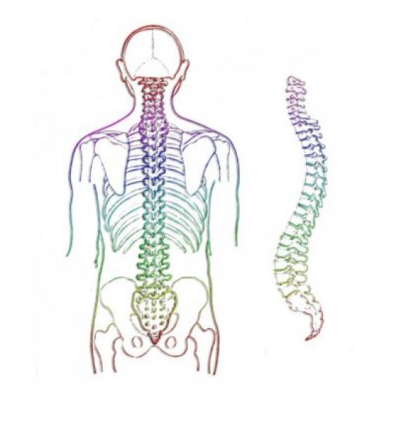 dureri de gât și umeri tratamentul osteoartrozei de gradul 3 al articulației șoldului
