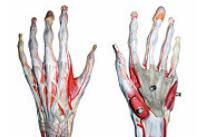 degetul mare al mâinii drepte în articulație