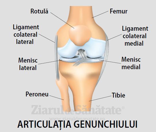 toate bolile articulației genunchiului în ordine alfabetică
