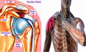 antiinflamatoare steroid articular articulația cotului doare constant
