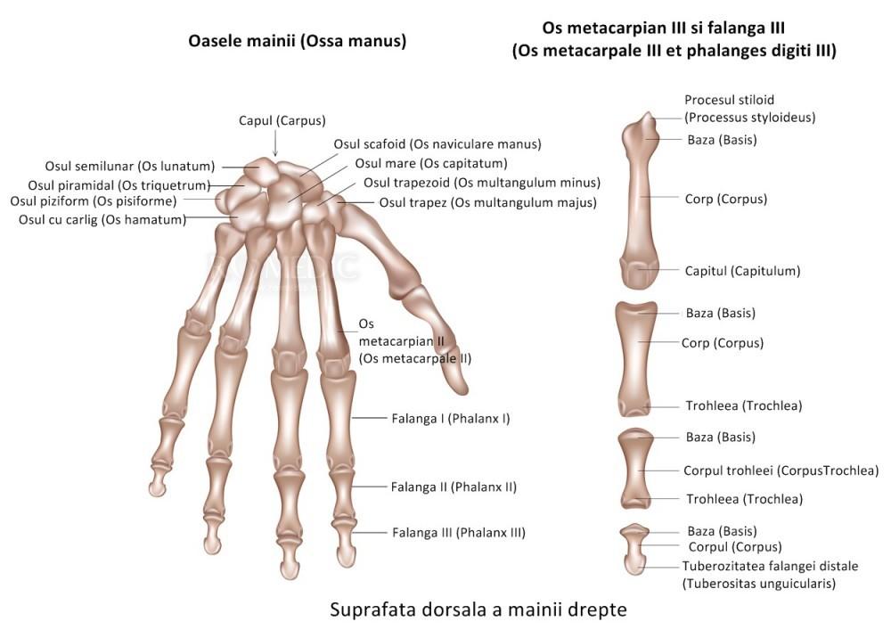 Durere în articulația degetului inelar dimineața Cum doare articulațiile genunchiului