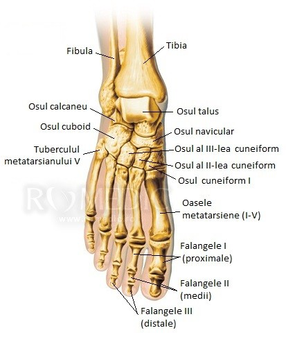 mărirea articulațiilor degetelor de la picioare)