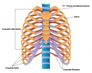 boala cartilajului toracic)