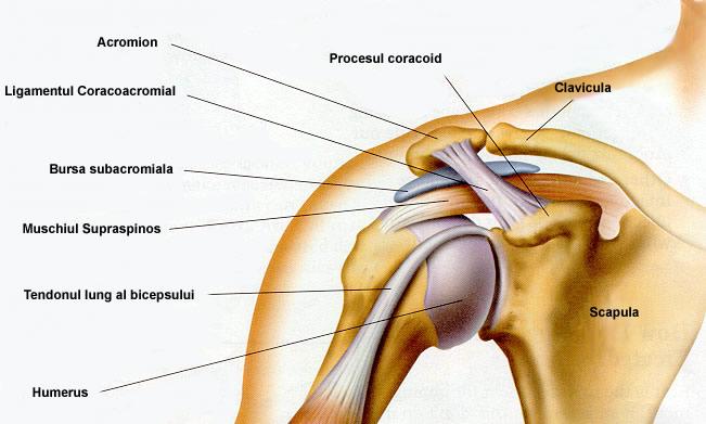 Gimnastica durerii articulare a umărului - Instabilitatea cronica de umar - Kinetic