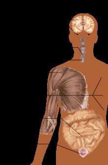 tratamentul sclerozei articulare