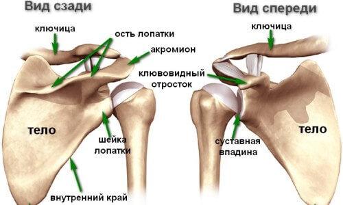 боль в суставах плечевой капсулы)
