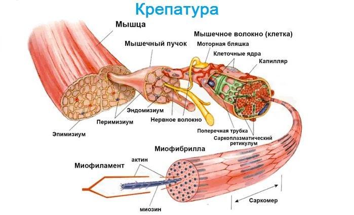 ketane pentru dureri la nivelul articulațiilor și mușchilor