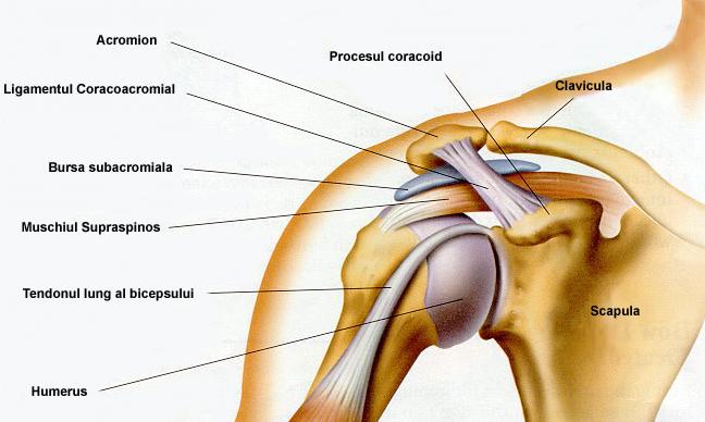 clicuri și durere în articulația umărului