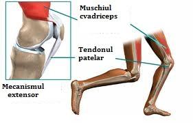 artroza femurală a genunchiului patello)