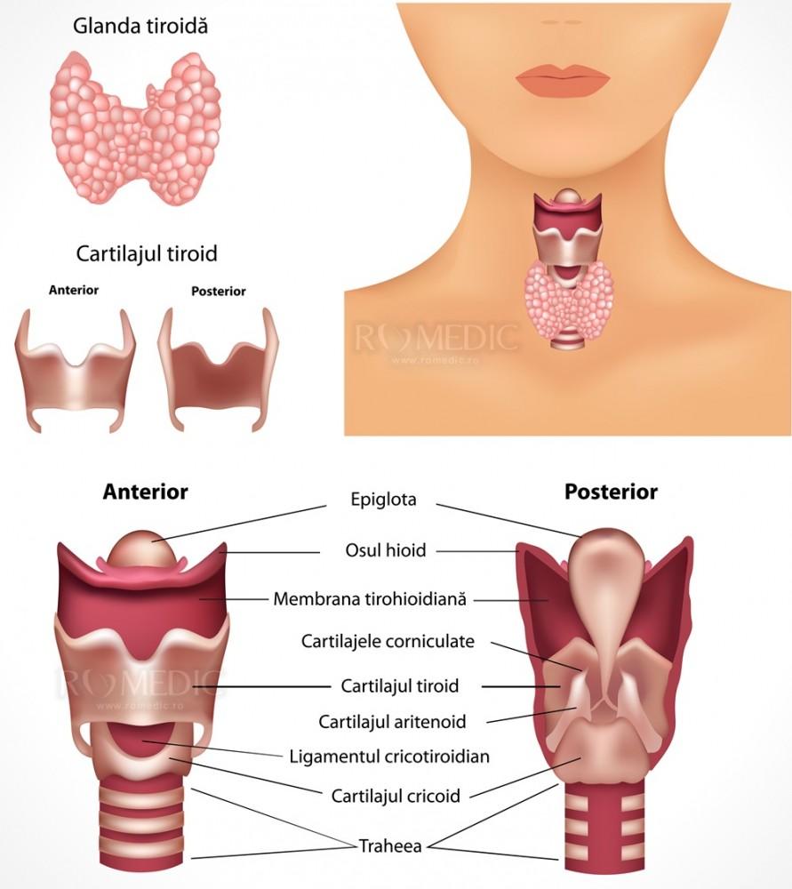 efectul bolii tiroidiene asupra articulațiilor