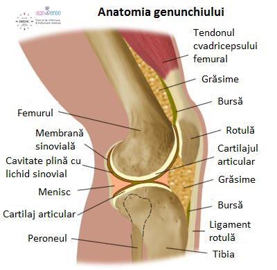 zona genunchiului și articulația genunchiului)
