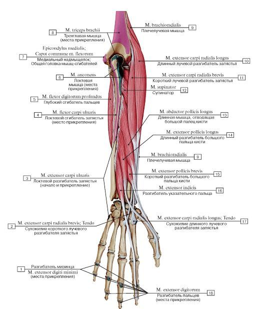 cum să tratezi artrita articulației genunchiului umăr atenuând durerea articulației umărului