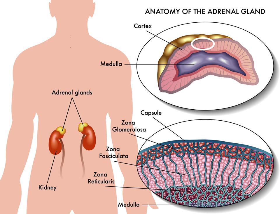 boli ale țesuturilor moi ce injecții fac din durerile articulare