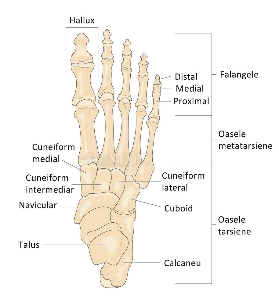 durere în articulațiile piciorului piciorului drept)