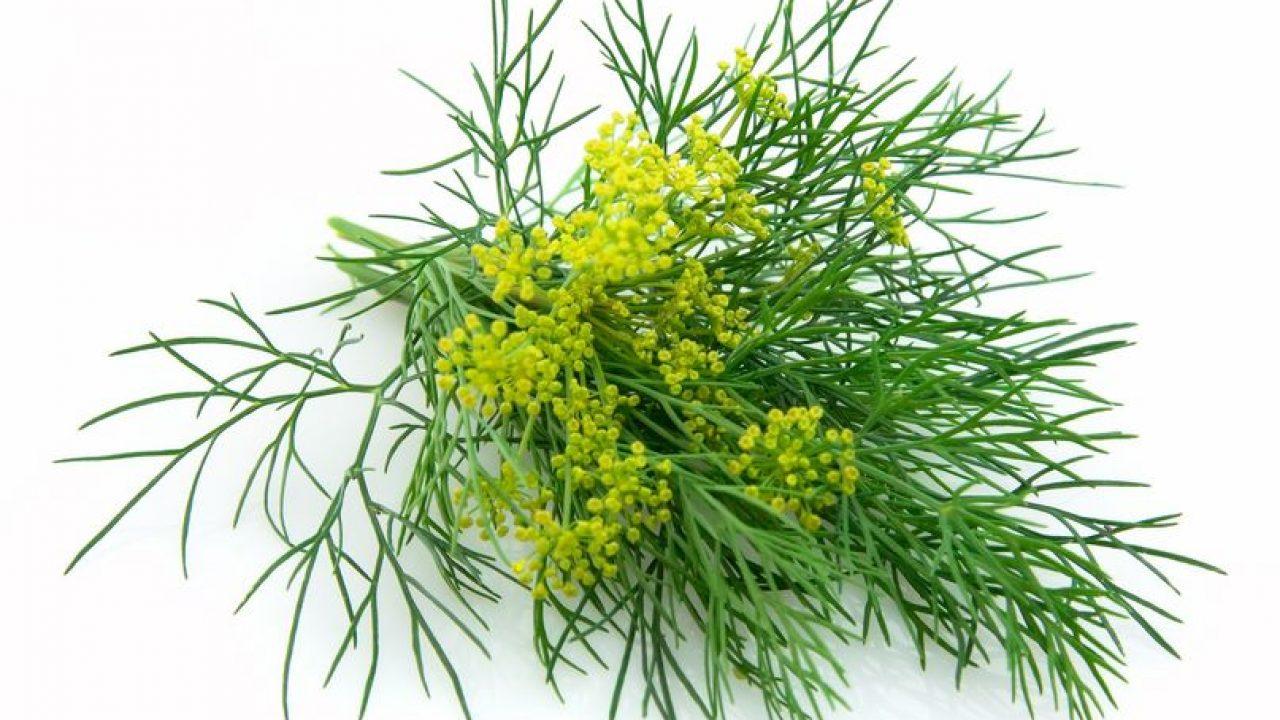 semințe tratamentul articulațiilor de mărar)