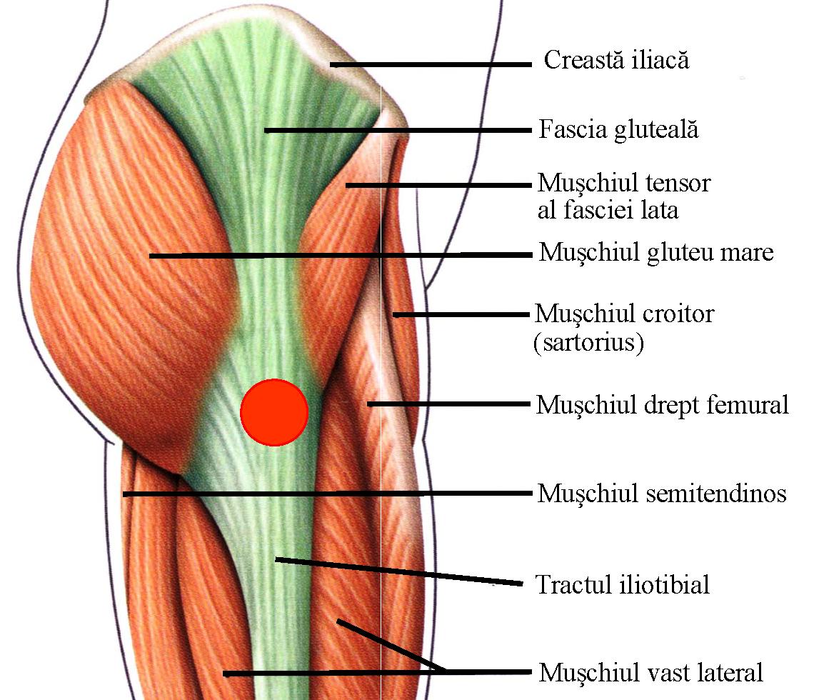 de ce articulația șoldului doare și face clic