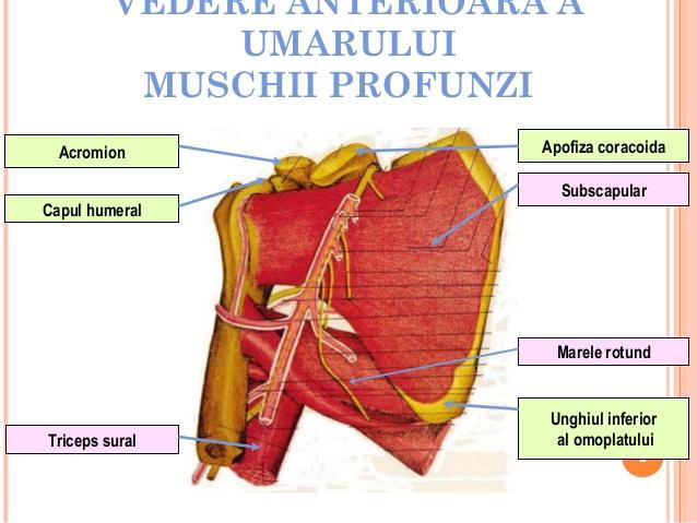 periartrita posttraumatică a tratamentului articulației umărului)