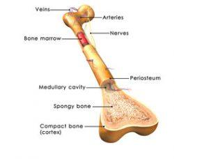 falsă articulație a tratamentului tibiei