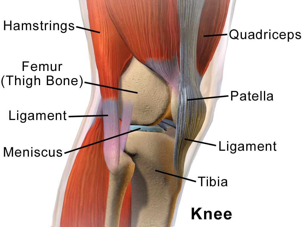 genunchi adânc în interiorul articulației)