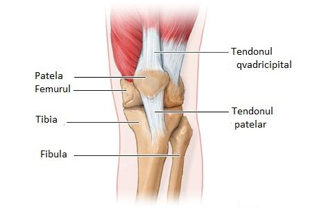 Condropatia genunchiului - Kinetic