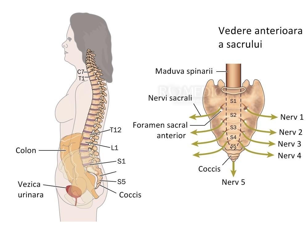 Inflamația articulațiilor vertebrale costale