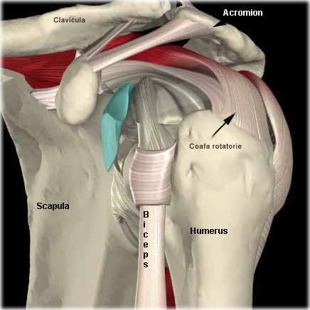 după împingeri, articulația umărului doare
