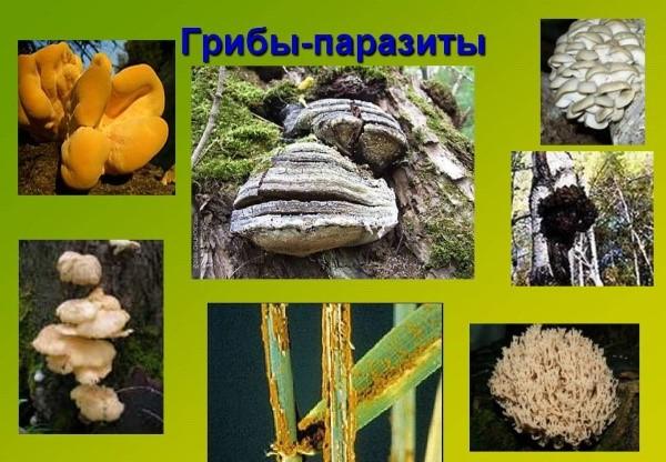 tratament comun cu ciuperci