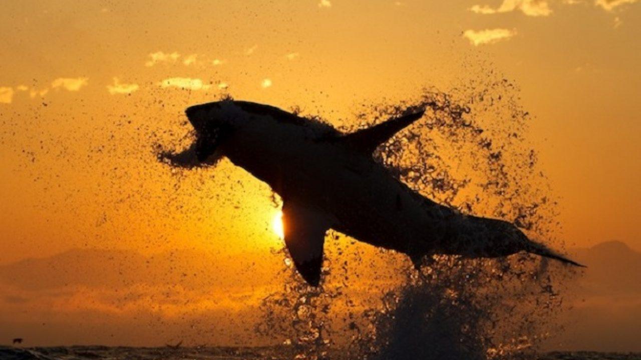 Cartilaj de rechin forte 30 capsule Pagina 3