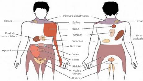 Splina a crescut durerea articulară. Posts navigation