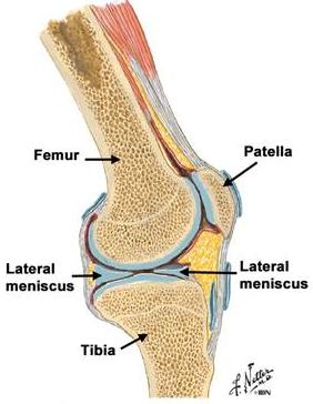 articulația se umflă deasupra articulației)