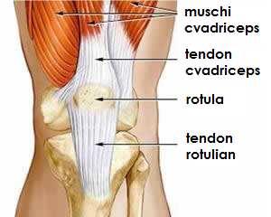 inflamația tendonului la genunchi