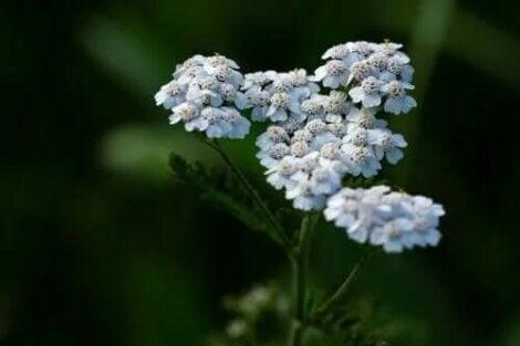 plante de vindecare pentru inflamații articulare