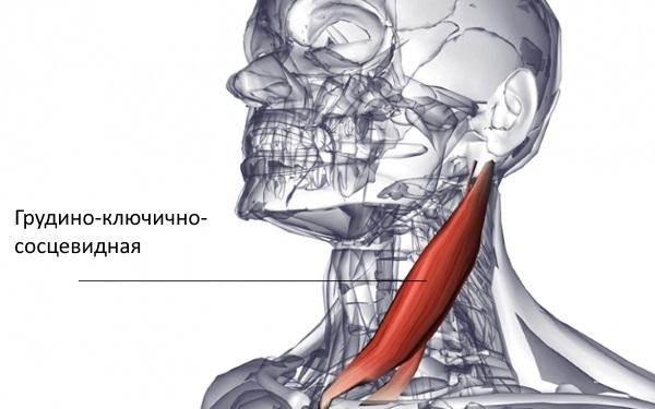 dureri de cusături în mușchi și articulații)