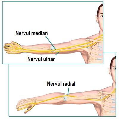 când încleștați un pumn, articulația cotului doare