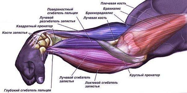 amorțeală a mușchilor și a brațului tratamentul artrozei dureri severe