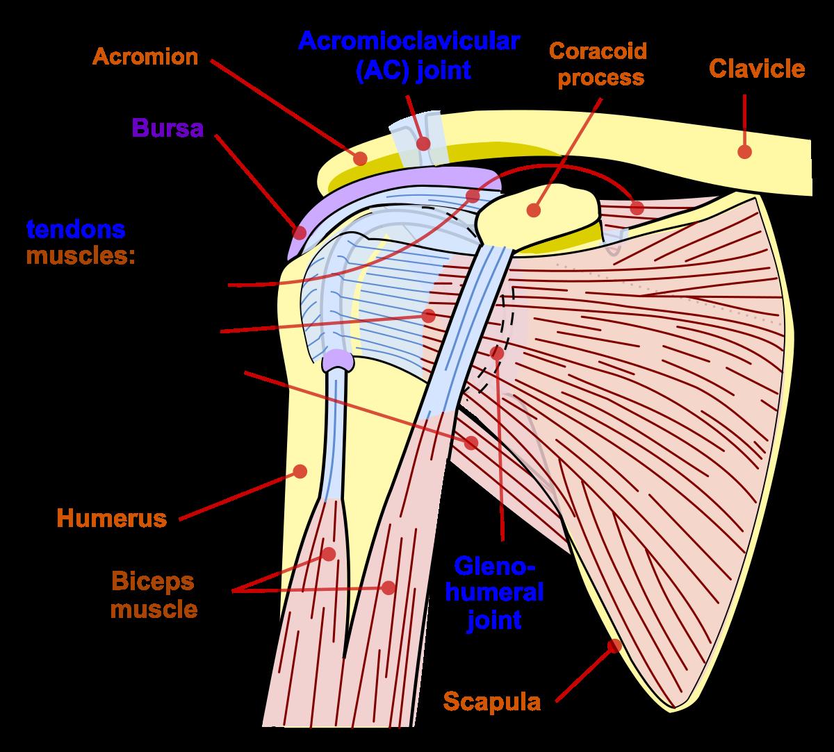 articulația umărului este foarte dureroasă