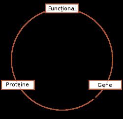 Biochimie - Wikipedia