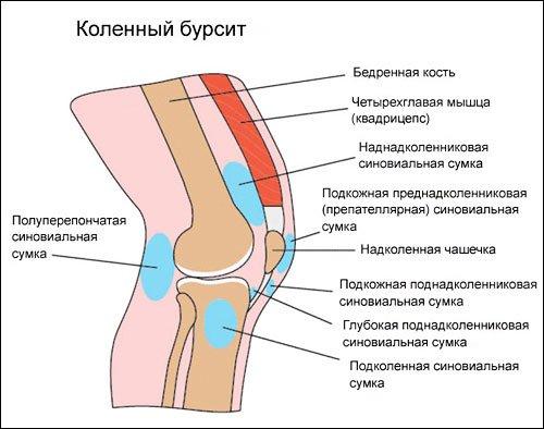 лечение левого коленного сустава mentă pentru boala articulară