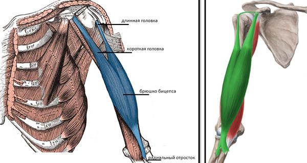 ruperea manșetei rotative a tratamentului articulației umărului