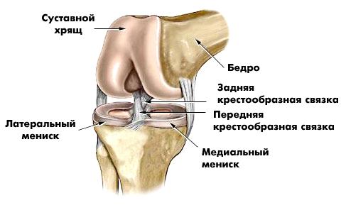 tratamentul prolapsului genunchiului tratamentul artrozei în Anapa