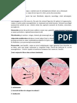 boli de colagenoză a țesutului conjunctiv)