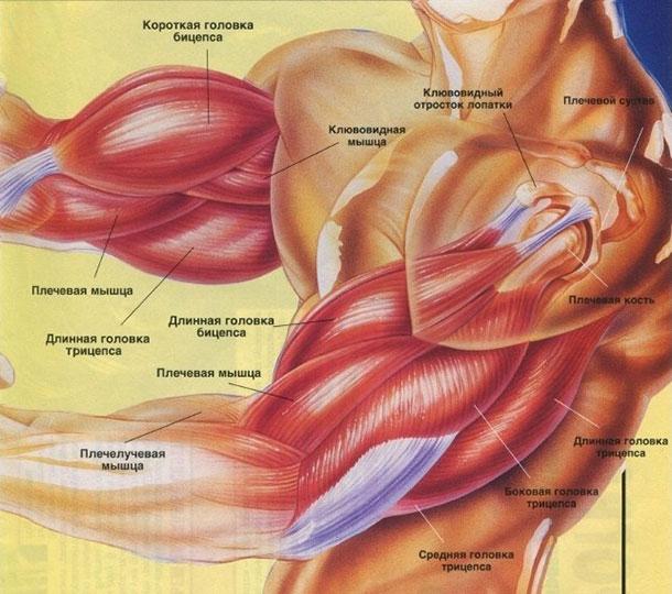 amorțeală a mușchilor și a brațului medicamente pentru durerea la genunchi