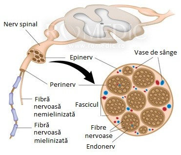 Neuropatia este o complicație a diabetului Polineuropatie și dureri articulare