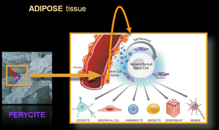 Tratamentul cu celule STEM | Consultatie Ortopedie