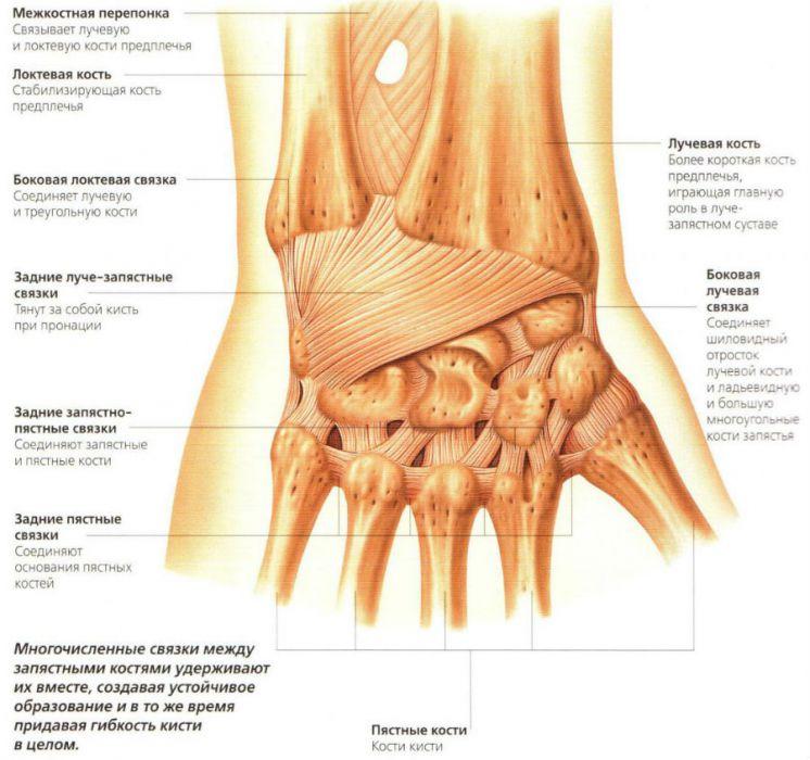 inflamația articulației ligamentului încheieturii)