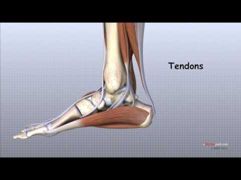 articulațiile piciorului rănesc picioarele)